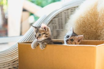 Kitten Containment Strategies to Keep Them Safe