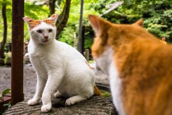 Two quarreling cats
