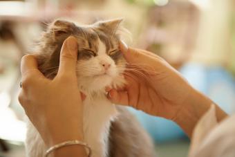 Cat Facial Massage