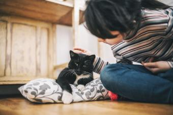 Pain Relief for Cats: 12 Remedies (From Medicine to Holistic)