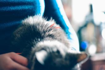 Cat receiving acupuncture