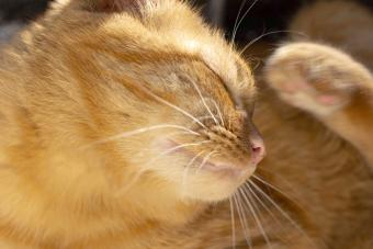 Cat Skin Allergies: What Owners Need to Know