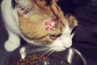 Cat with bold patches