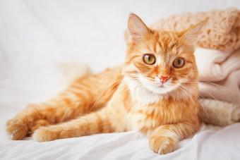 200+ Captivating Female Cat Names