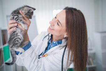 veterinarian holding a little cat