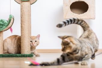 cats playing in living room with cat stand and toys