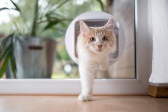Cat passing through cat flap