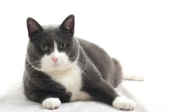 Expert Answers to Frequently Asked Cat Questions