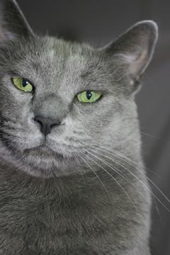 Feline Diabetes and How It Could Affect Your Cat's Life