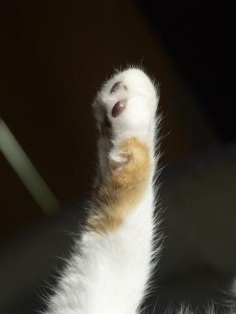 cat stretching it's paw out