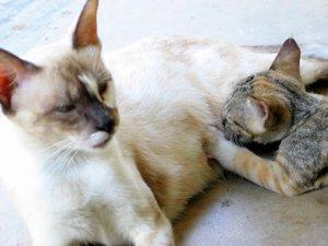 Nursing kitten