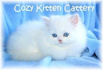 Tips From a Persian Cat Breeder