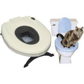 Steps Involved in Cat Toilet Training