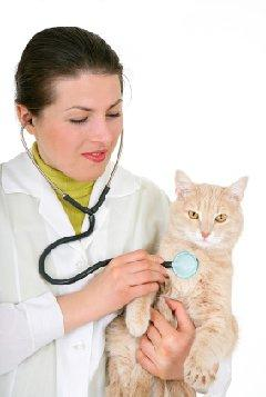 Reasons for Neutering Cats and When to Do It