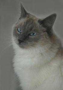 Characteristics of Ragdoll Kittens