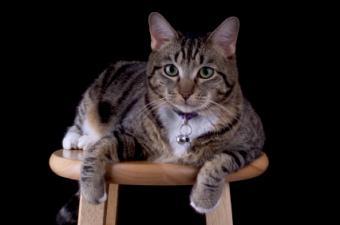 Using a Cat Collar After Neck Surgery