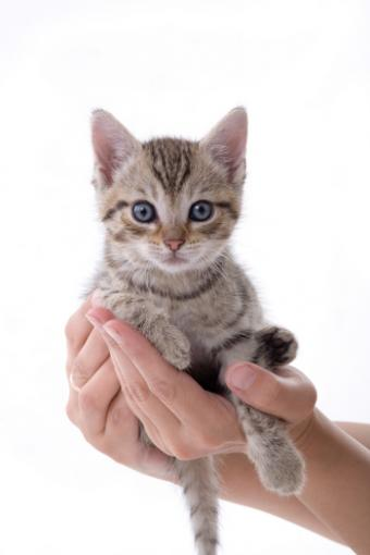 Caring for an Abandoned Kitten
