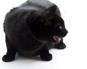 Unfriendly Cats