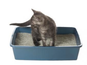 Critical Cat Litter Safety Concerns