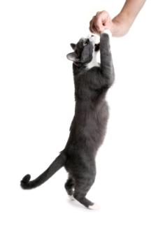Choosing Holistic Supplements for Cats