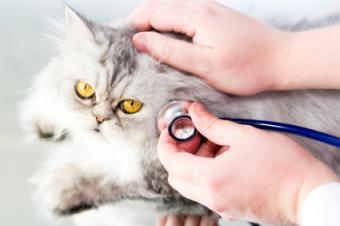 A kitty checkup.
