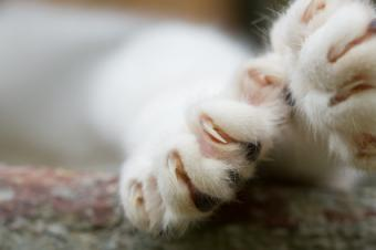 House cat paws