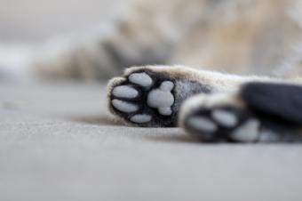 Examples of Cat Paw Prints