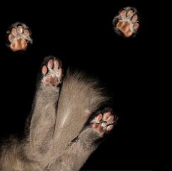 Cat paws viewed through a glass table top