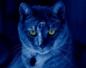 Cats That Glow in the Dark