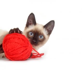Symptoms and Types of Feline Kidney Failure