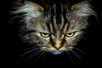 Causes and Treatment of Feline Constipation
