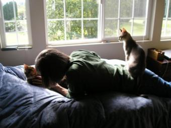 Jennifer-Streit-cats.JPG