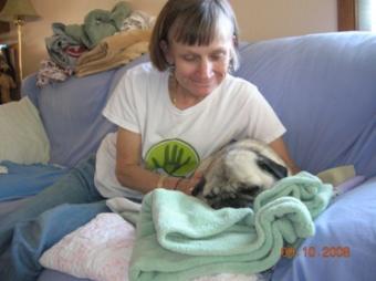 cat massage therapist massaging a cat
