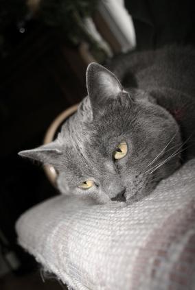 Essential Tips for Geriatric Cat Care