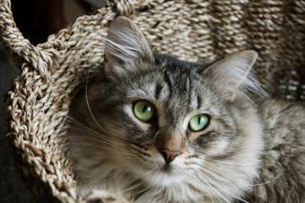 https://cf.ltkcdn.net/cats/images/slide/89822-849x565-Cat-in-a-basket.jpg