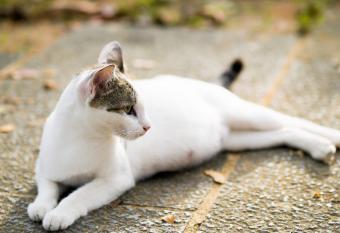 https://cf.ltkcdn.net/cats/images/slide/89823-800x549-dreamstime_pregnant-cat.jpg