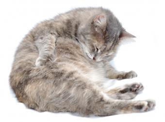 https://cf.ltkcdn.net/cats/images/slide/89826-806x596-Fat-cat-5.jpg