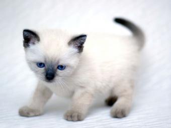 https://cf.ltkcdn.net/cats/images/slide/89859-800x600-Cute-fuzzy-9.jpg