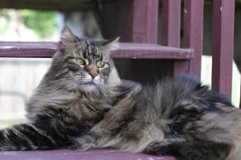https://cf.ltkcdn.net/cats/images/slide/89881-849x565-MCP5.jpg