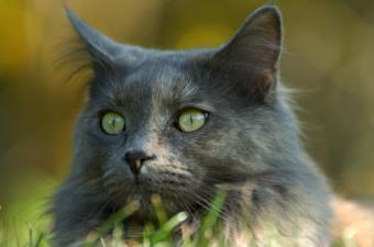 https://cf.ltkcdn.net/cats/images/slide/89882-850x562-MCP6.jpg