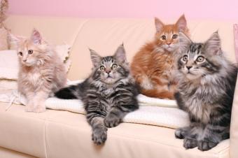 https://cf.ltkcdn.net/cats/images/slide/89886-849x565-MCP10.jpg