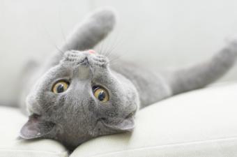 Feline Diabetes Symptoms to Notice in Your Cat
