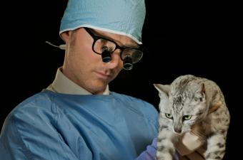 https://cf.ltkcdn.net/cats/images/slide/89892-850x562-diabetes-symptoms-vomiting.jpg