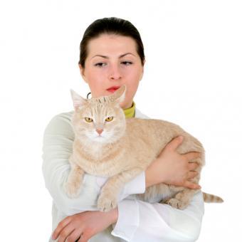 https://cf.ltkcdn.net/cats/images/slide/89894-693x693-diabetes-symptoms-skin-and-coat.jpg