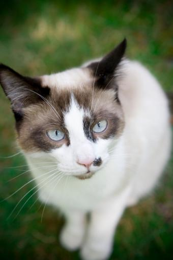 https://cf.ltkcdn.net/cats/images/slide/89896-566x848-diabetes-symptoms-last.jpg