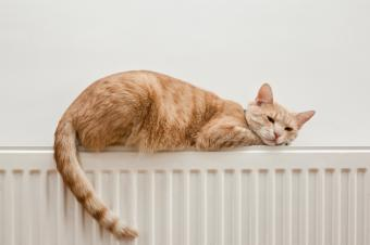 https://cf.ltkcdn.net/cats/images/slide/89939-849x565-cat-slide-5.jpg