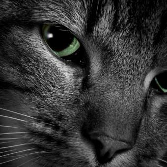 https://cf.ltkcdn.net/cats/images/slide/89940-693x693-cat-slide-6.jpg