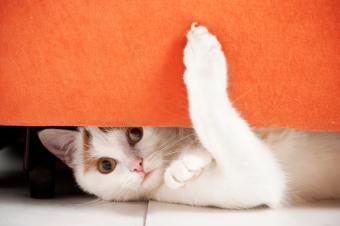 https://cf.ltkcdn.net/cats/images/slide/89943-849x565-cat-slide-9.jpg