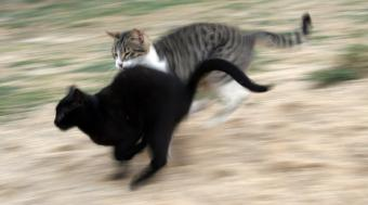 https://cf.ltkcdn.net/cats/images/slide/89947-850x472-cat-running.jpg