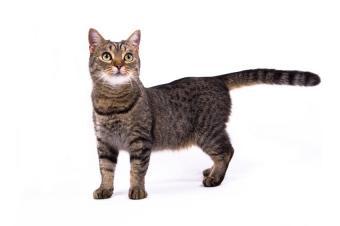 https://cf.ltkcdn.net/cats/images/slide/89950-850x565-cat-tail.jpg